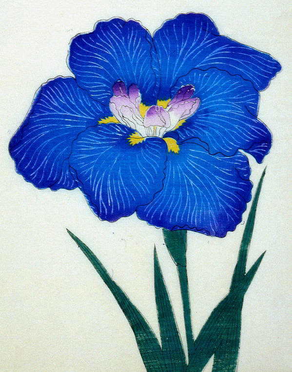 Floral Art Print featuring the painting Japanese Flower by Japanese School