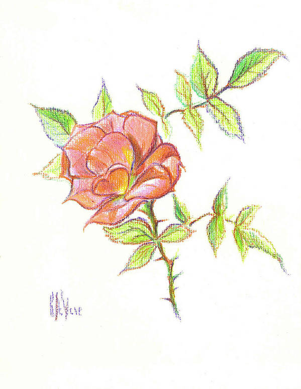 A Rose In Brigadoon Art Print featuring the drawing A Rose In Brigadoon by Kip DeVore
