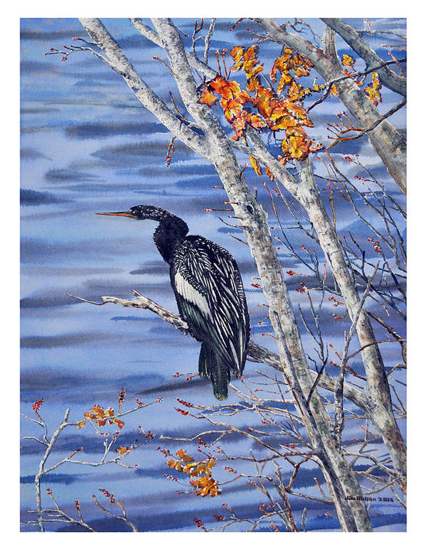 Anhinga Is A Water Bird Related To A Cormorant. Also Called The 'snake Bird' This Is A Male With Black And White Feathers Sitting In A Stand Of White Birch Trees. Art Print featuring the painting Anhinga by Jim Melton