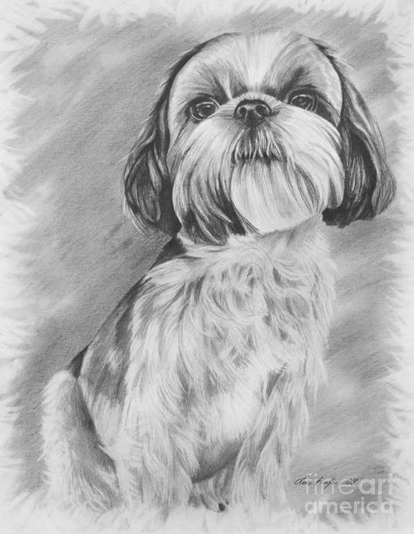 Graphite Art Print featuring the drawing Drawing Of A Shih Tzu by Lena Auxier