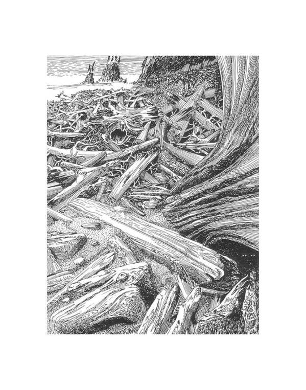 Find The Critter? Art Print featuring the drawing Critter In The Driftwood by Jack Pumphrey