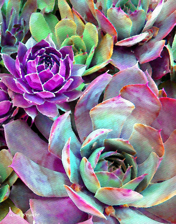 Hens And Chicks Photography Print featuring the photograph Hens And Chicks Series - Urban Rose by Moon Stumpp