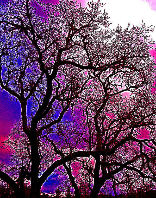 Trees Art Print featuring the photograph Oaks 6 by Pamela Cooper