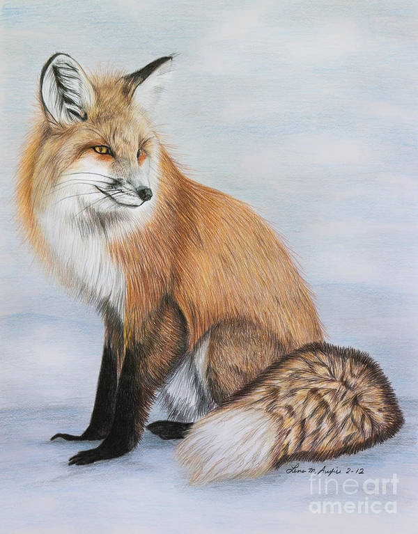 Drawing Art Print featuring the drawing Red Fox by Lena Auxier
