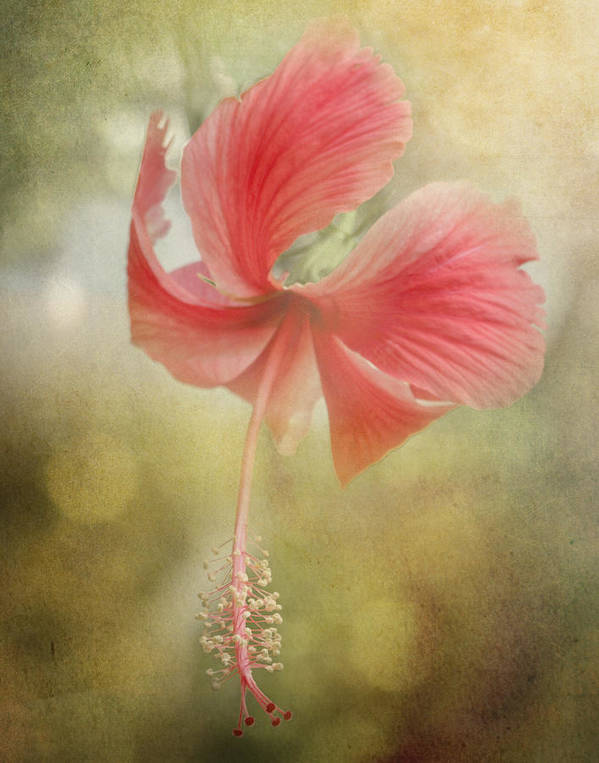 Close Up Art Print featuring the photograph Red Hibiscus by David and Carol Kelly