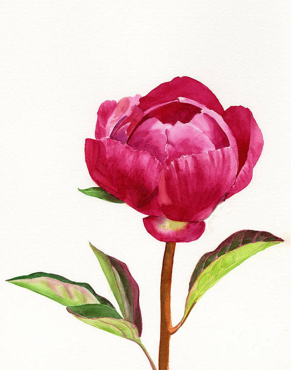 Red Art Print featuring the painting Red Peony With Leaves by Sharon Freeman