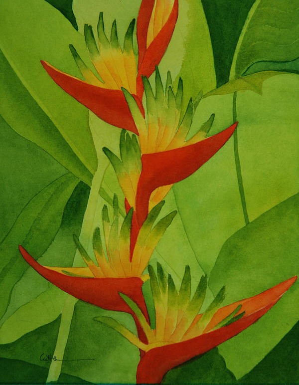 Heliconia Art Print featuring the painting Rojo Sobre Verde by Diane Cutter