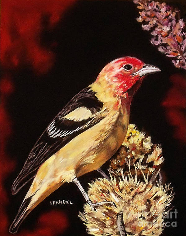Western Tanager Art Print featuring the pastel Sunbright Songbird by Shandel Gamer