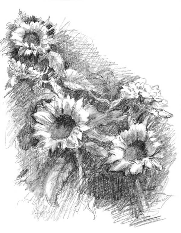 Landscape Print featuring the drawing Sunflowers by Sarah Parks