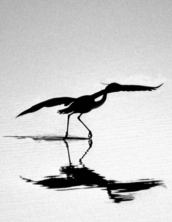 Names Of Birds Art Print featuring the photograph The Dance by Skip Willits