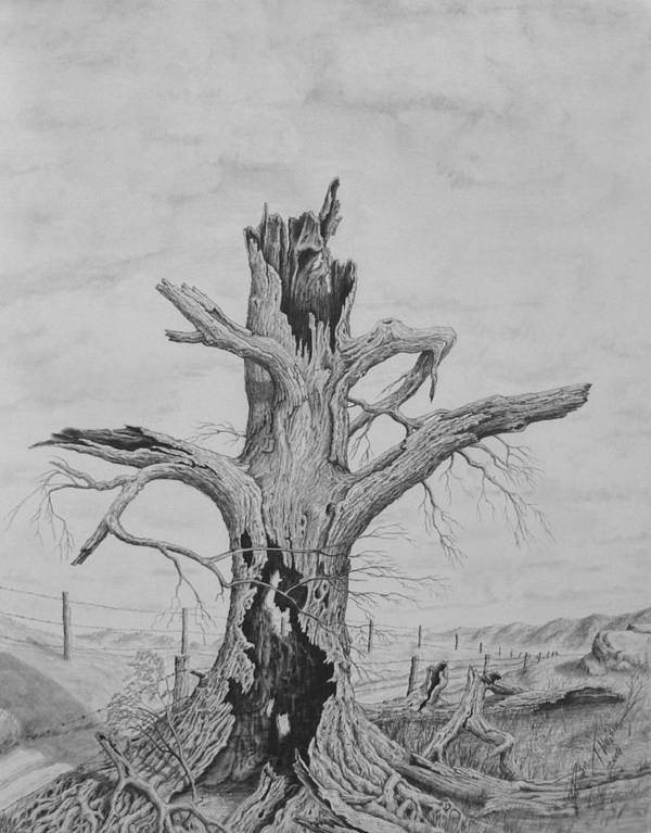 Realistic Drawing Art Print featuring the drawing The Survivor by Dan Theisen