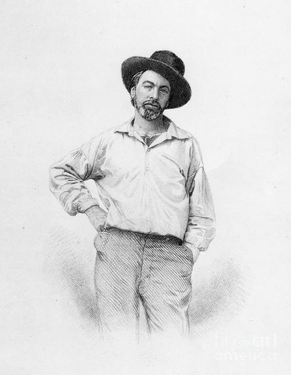 Portrait; Three Quarter Length; Male; Beard; Bearded; Hat; Writer; Author; Hand On Hip Art Print featuring the drawing Walt Whitman Frontispiece To Leaves Of Grass by American School