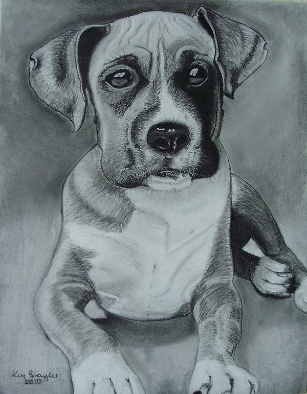 Dog Art Print featuring the painting Baxter by Kim Shayler