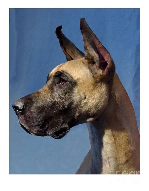 Great Dane Digital Art Art Print featuring the digital art Great Dane 892 by Larry Matthews