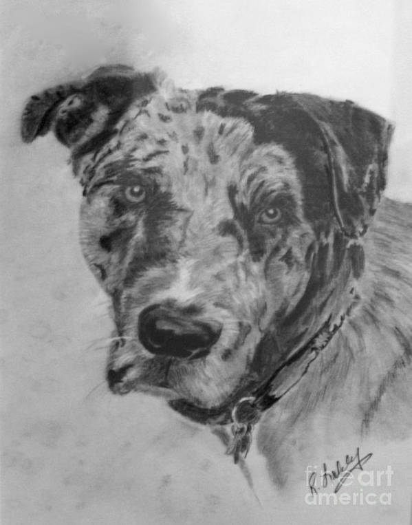 Dog Art Print featuring the drawing Simon by Rob Ladely