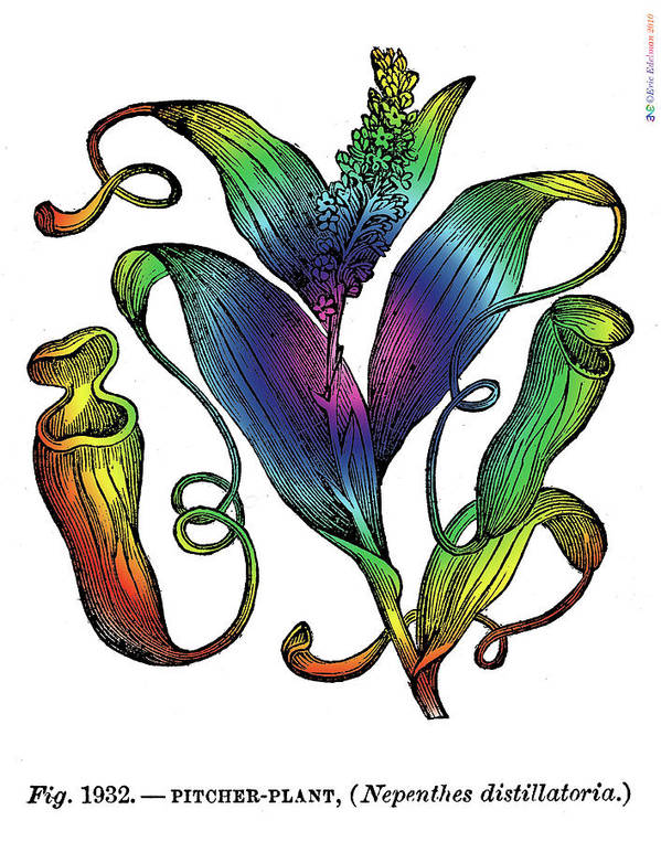 Pitcher Plant Art Print featuring the digital art Pitcher Plant by Eric Edelman