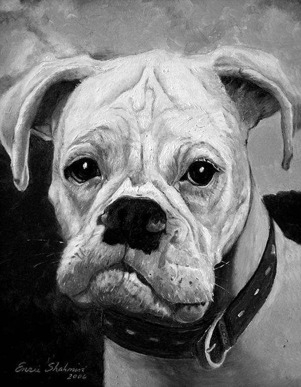 Boxer Art Print featuring the painting Boo The Boxer by Portraits By NC
