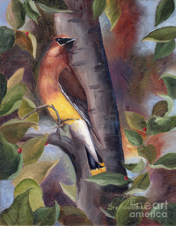 Bird Art Print featuring the painting Cedar Waxwing by Brenda Thour