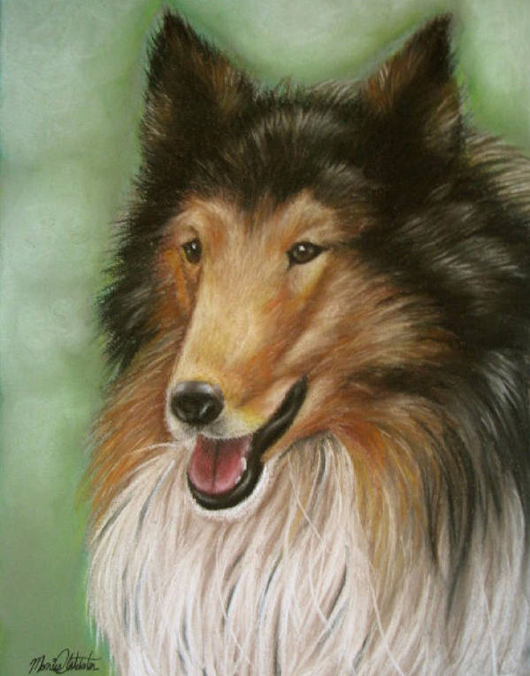 Dog Art Print featuring the painting Collie by Monica Webster