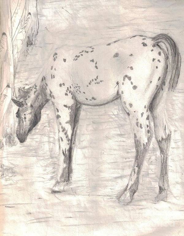 Appaloosa Art Print featuring the drawing Colt by Miles Mulloy