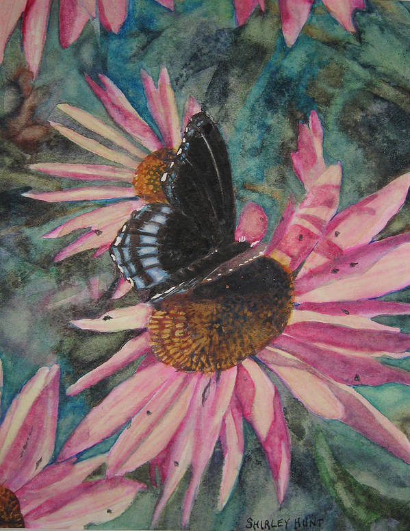 Botanical Art Print featuring the painting Coneflowers by Shirley Braithwaite Hunt