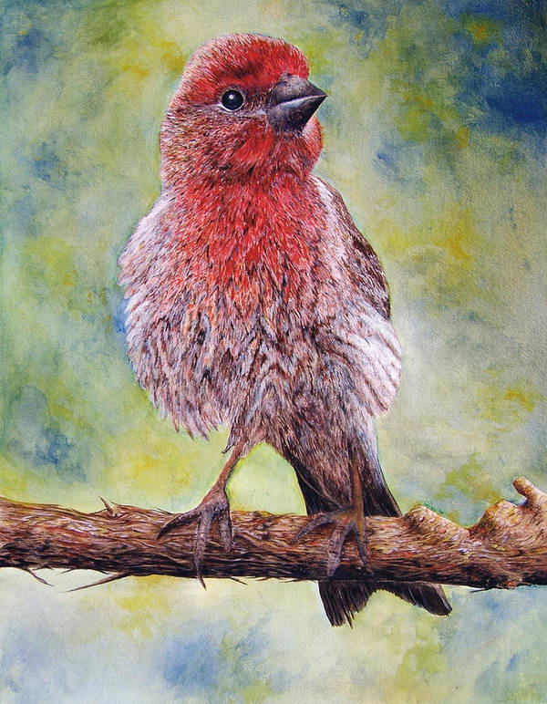 House Finch On Tree Branch Art Print featuring the painting Finchy by JoLyn Holladay