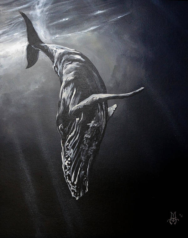 Whale Art Print featuring the painting Graceful Descent by Marco Antonio Aguilar