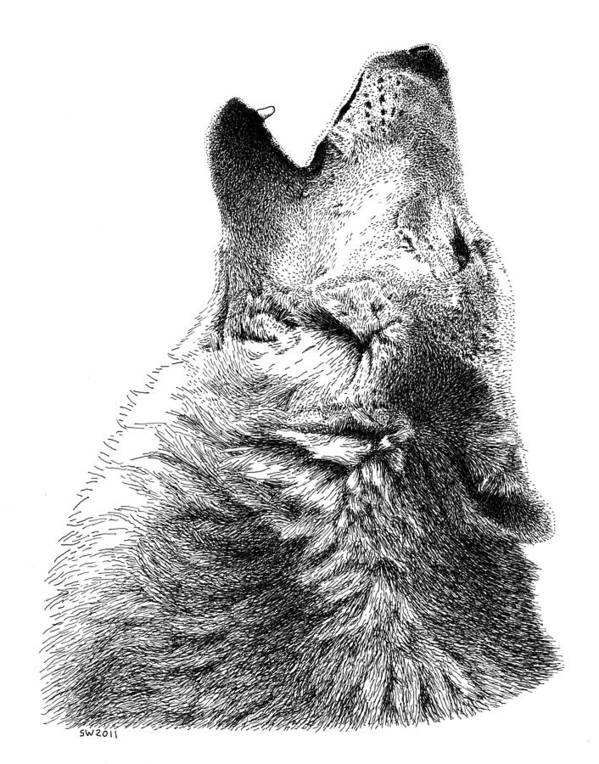 Howling Timber Wolf Art Print featuring the drawing Howling Timber Wolf by Scott Woyak