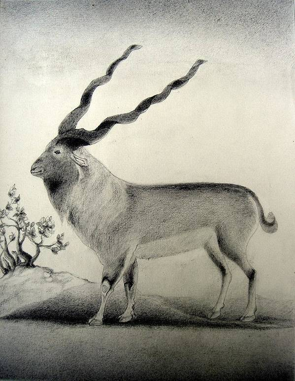 Mughal Miniature Art Print featuring the drawing Miniature Drawing Of Oryx by Caroline Urbania Naeem