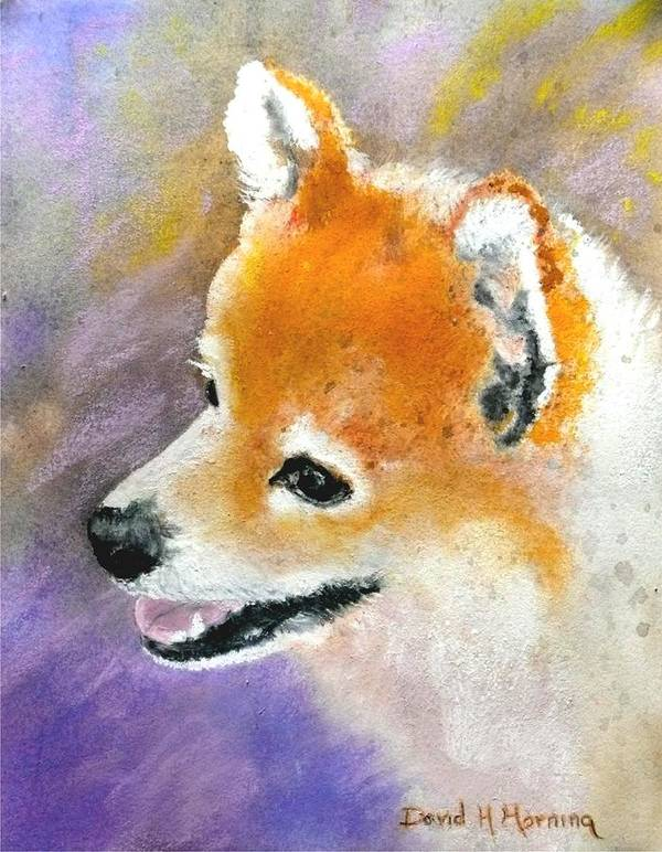 Pomeranian Art Print featuring the painting Nevada by David Horning