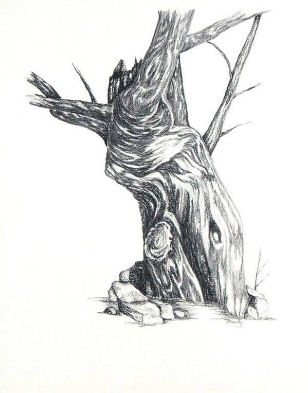 Tree Art Print featuring the drawing Old Tree by Brandy House