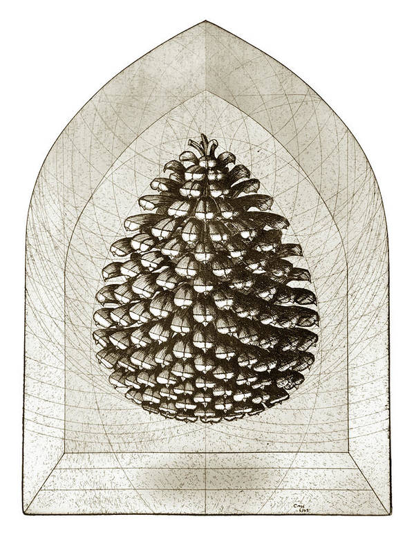 Pine Print featuring the drawing Pinecone by Charles Harden