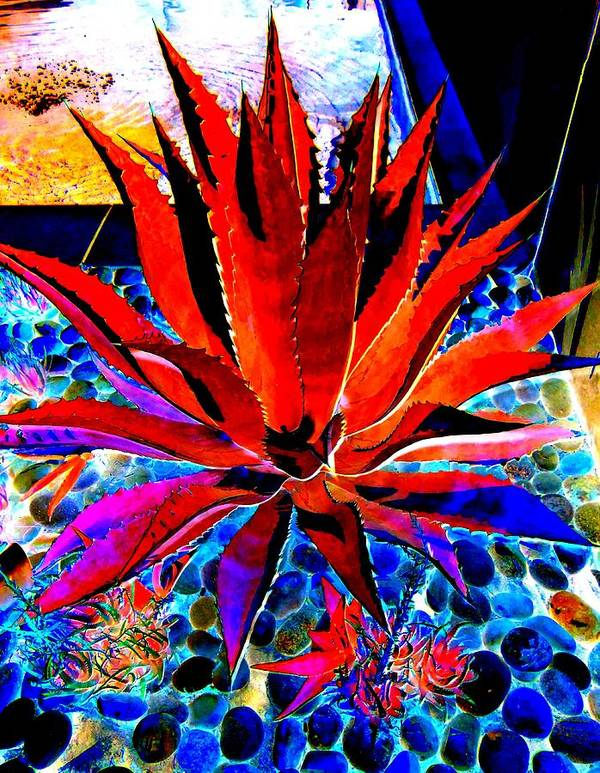 Red Agave Art Print featuring the photograph Red Agave by Randall Weidner