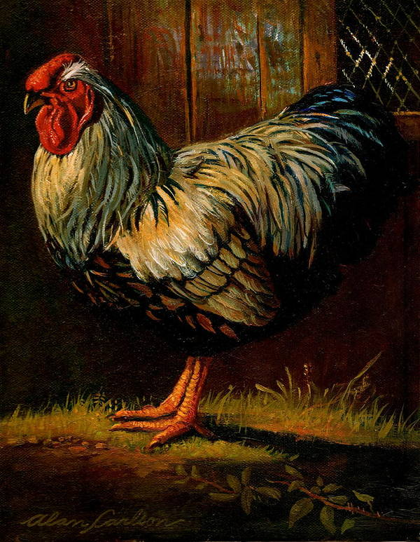 Poultry Art Print featuring the painting Silver Wyandotte Large Fowl. by Alan Carlson