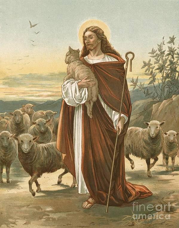 Bible; The Good Shepherd; Jesus Christ; Sheep; Halo; Crook Art Print featuring the painting The Good Shepherd by John Lawson
