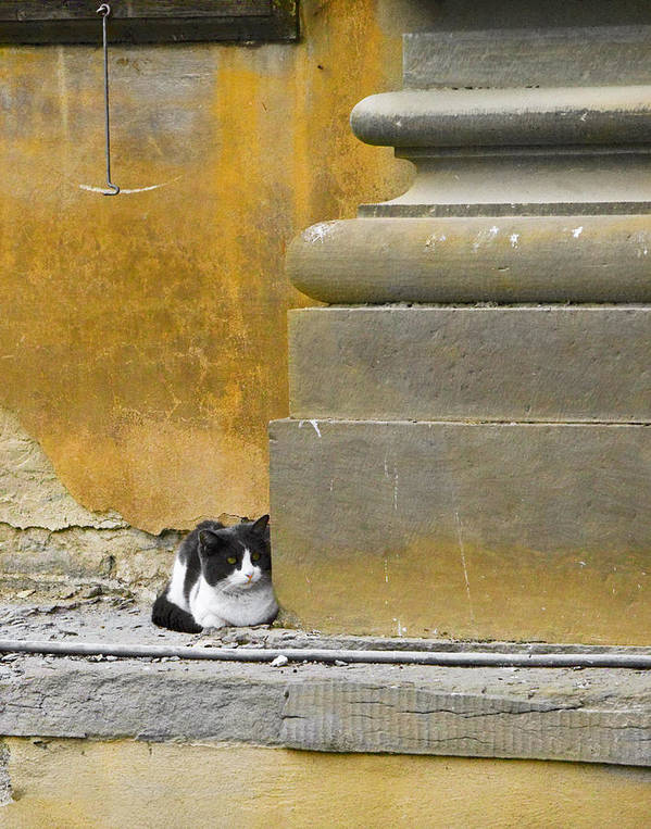 Cat Art Print featuring the photograph The Roman Guardian by Lynn Andrews