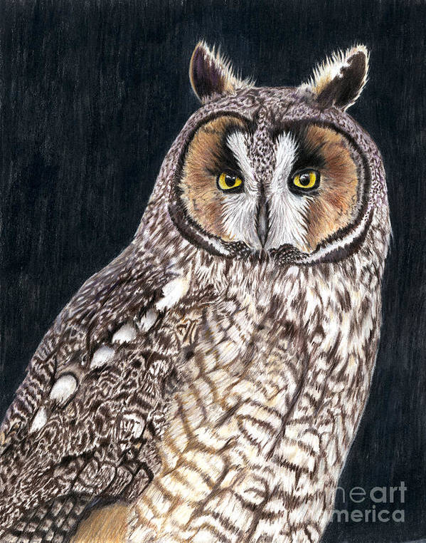 Owl Art Print featuring the drawing The Sentinel by Sheryl Elen