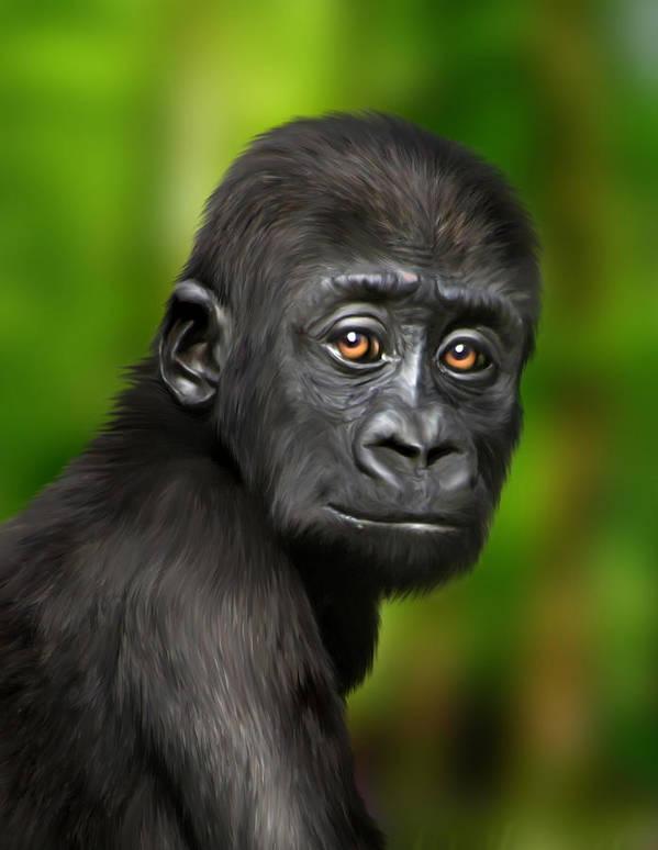 Gorilla Art Print featuring the digital art Western Lowland Gorilla Baby by Julie L Hoddinott