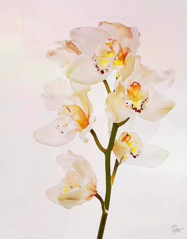 Watercolor Art Print featuring the photograph White Orchids Faux Watercolor by Endre Balogh