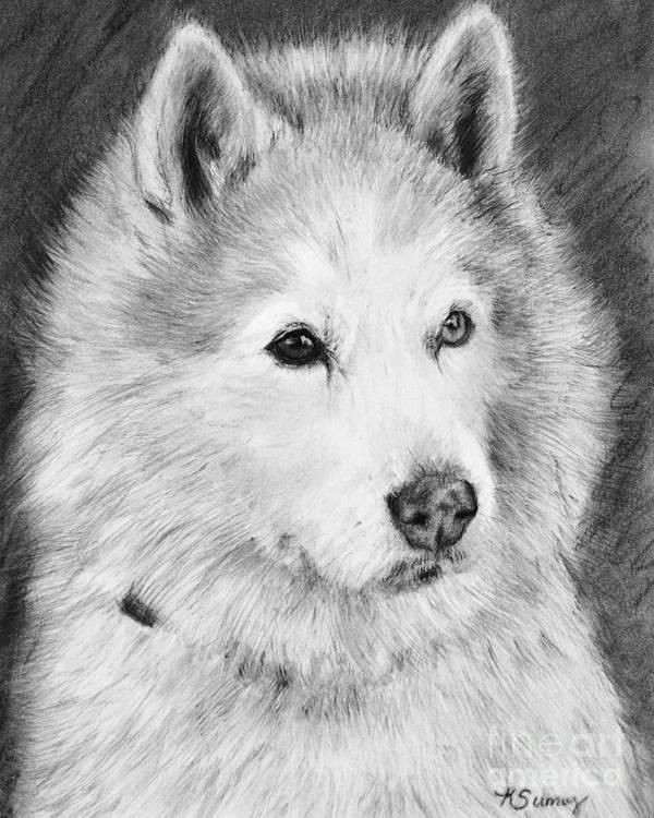 Alaskan Malamute Art Print featuring the drawing Alaskan Malamute Drawing Mardi by Kate Sumners