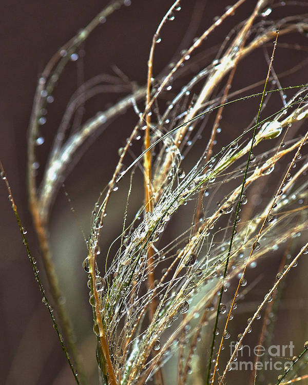 Sea Grass Art Print featuring the photograph Beads Of Water On Sea Grass by Artist and Photographer Laura Wrede