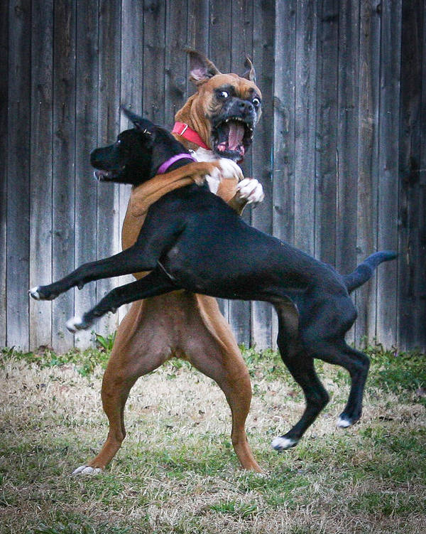 Dog Art Print featuring the photograph Best Of Friends by Jeff Mize