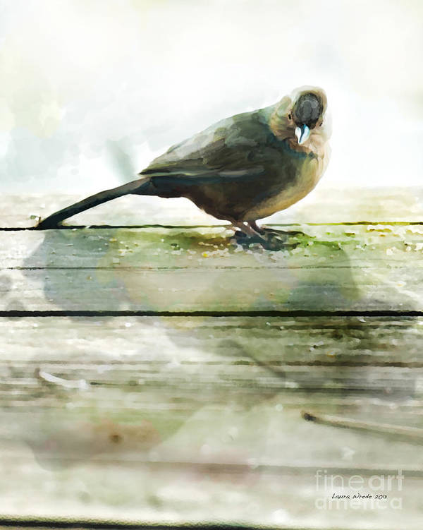 Bird Images Art Print featuring the painting Bird On The Deck by Artist and Photographer Laura Wrede