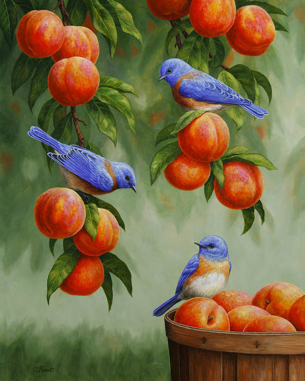 Birds Art Print featuring the painting Bird Painting - Bluebirds And Peaches by Crista Forest