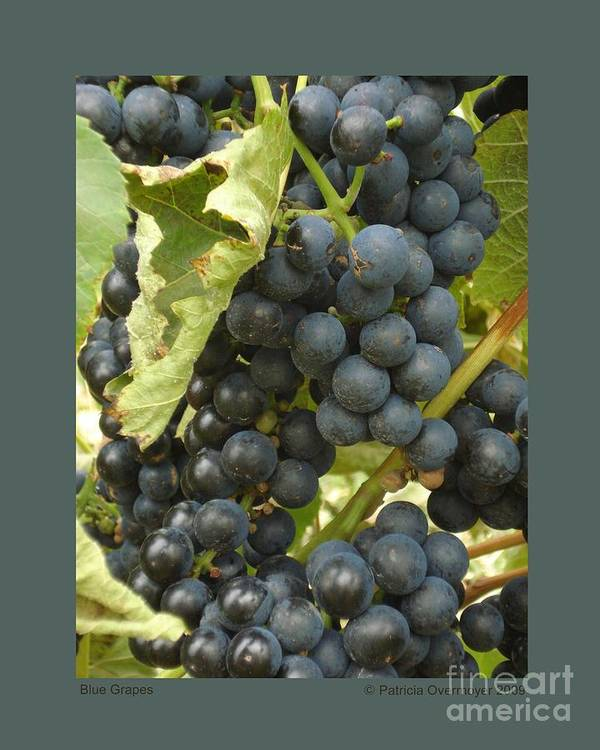 Grape Print featuring the photograph Blue Grapes by Patricia Overmoyer