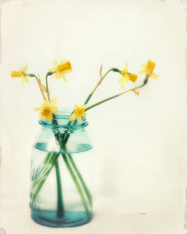 Daffodil Art Print featuring the photograph But I Love You Still by Amy Tyler