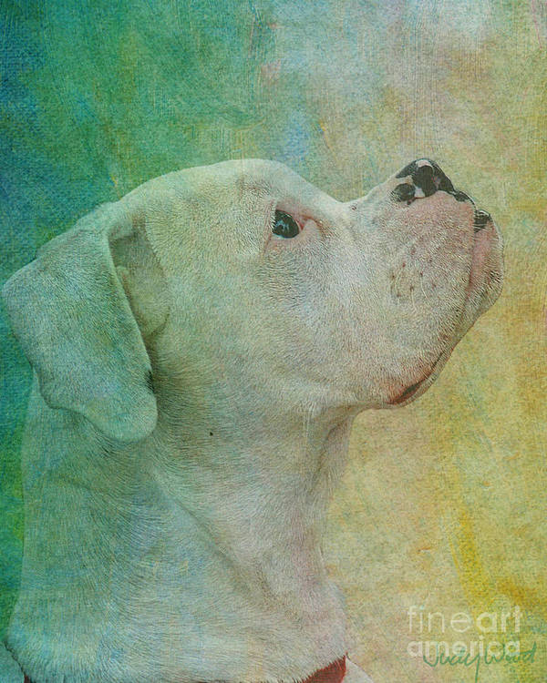 Dog Art Print featuring the digital art Colours by Judy Wood