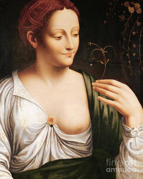 La Colombine Art Print featuring the painting Columbine by Leonardo da Vinci