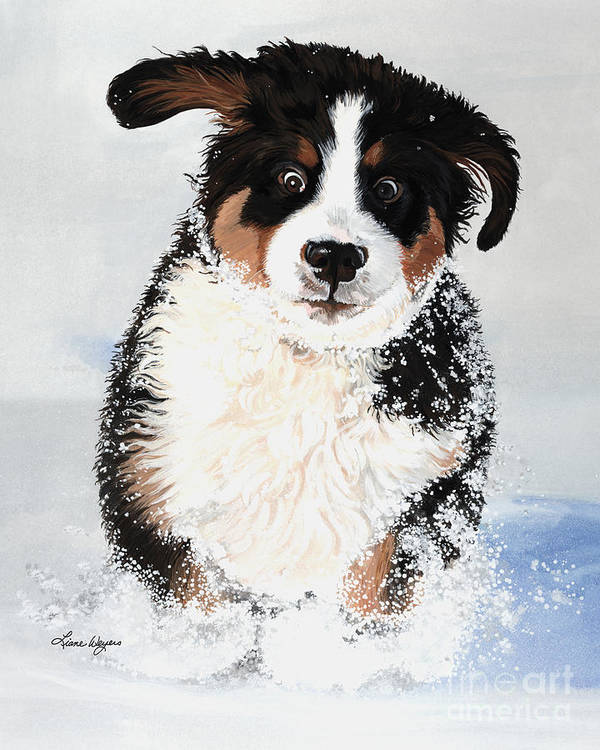 Bernese Mountain Dog Pup Puppy Mounds Of Snow Crazy Playing Happy Snow Drifts Flakes Crazed Liane Weyers Artist Painting Best Berner Artist Art Print featuring the painting Crazy For Snow by Liane Weyers