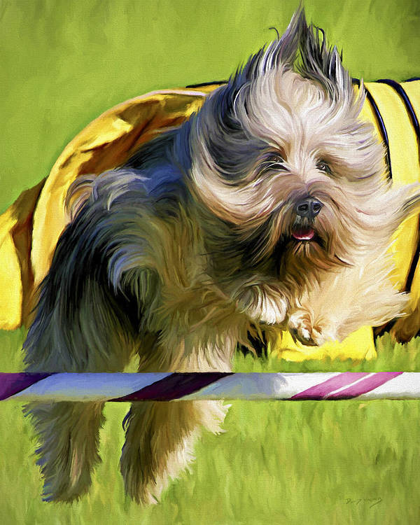 Silky Terrier Art Print featuring the painting High Flier by David Wagner